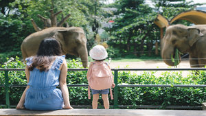 Elefant Zoo Hannover